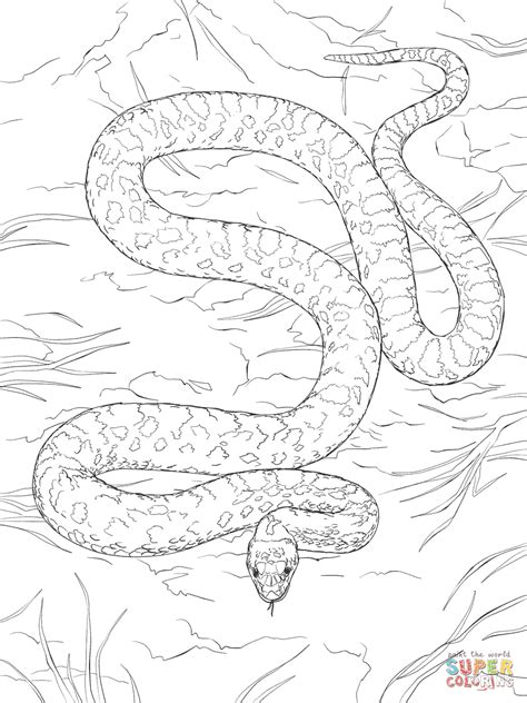 milk snake coloring page gopher snake coloring page free printable coloring pages