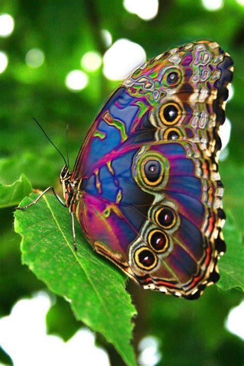 imagenes sobre mariposas 17 mejores ideas sobre mariposas en pinterest besos de