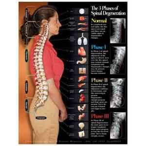 Massage Chair Reviews Human Anatomy Charts Muscle Anatomy Chart Anatomy Posters