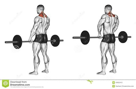 Reverse Grip Bench Press Exercising Shrugs With Barbell Stock Illustration