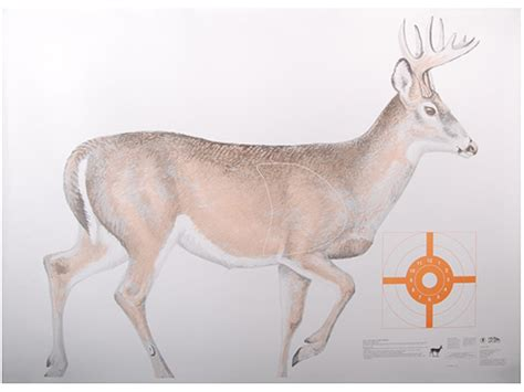 printable paper deer targets nra official lifesize game targets white tail deer upc