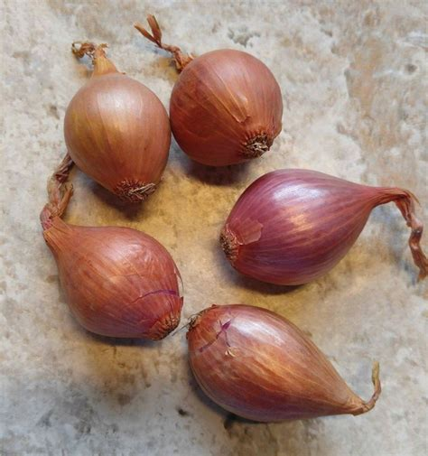 shallots can you use them instead of onions