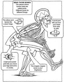 human anatomy coloring book free coloring pages of human systems