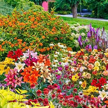 butterfly garden kit 30 perennials that attract butterflies