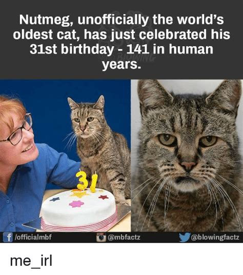 Oldest Memes - nutmeg unofficially the world s oldest cat has just celebrated his 31st birthday 141 in human