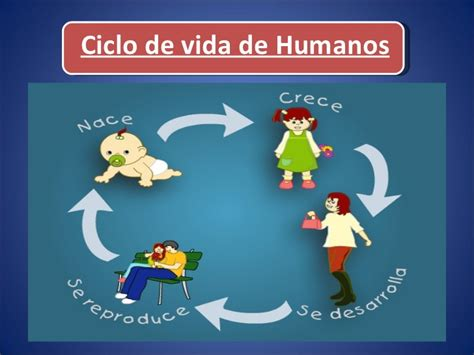 imagenes del ciclo de la vida humana ciclos de vida
