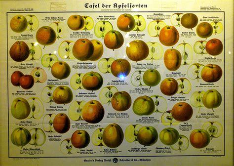 apfelbaum mehrere sorten wie viele apfelsorten gibt es