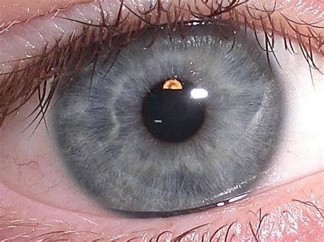 silver eye color silver eye color meaning