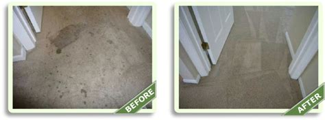 best carpet cleaning service in manhattan