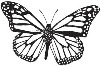 coloring page for monarch butterfly pinterest the world s catalogue of ideas