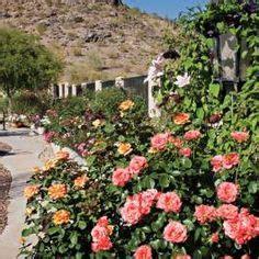 roses  grow  phoenix teacher  care