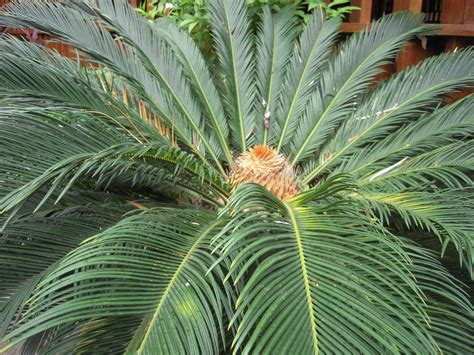 sago palm dogs pet world insider article keeping pets safe from common toxins in the yard and