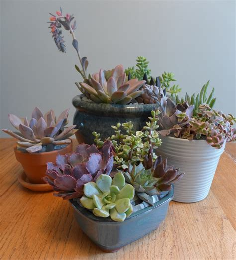 outdoor plants that don t need sunlight small plants that don t need sun low light houseplants