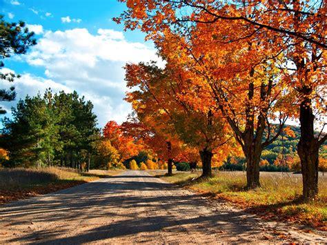 wallpaper sunlight trees landscape leaves nature