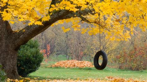 old tire swing nostalgic wallpapers wallpaper cave