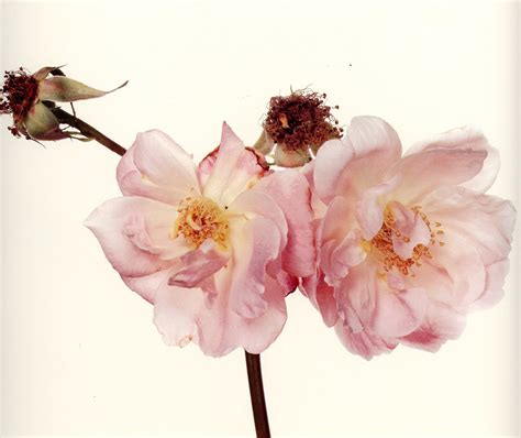 Home Interiors Catalogo Flowers By Irving Penn The Gorgeous Daily