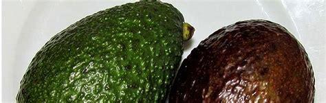 Planter Un Noyau D Avocat Germ by Comment Planter Des Noyaux D Avocat Cheap Pour With