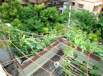 ultimate guide  indian rooftop gardening sacred cows