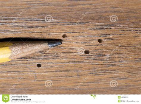 wood boring beetle damage stock photo image 48790203