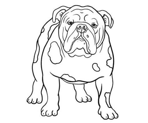 imagenes chidas a color para dibujar 35 im 225 genes de perros para colorear e imprimir cancitos