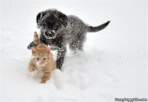 puppy vs kitten puppy vs kitten funnypuppysite