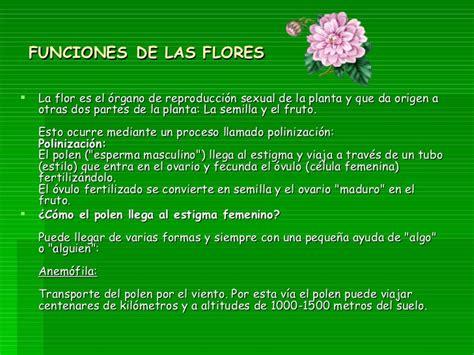 Resumen Y Sus Partes by Las Flores Sus Partes Y Funciones