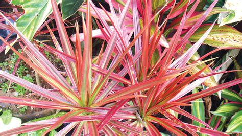 plants  interior decor saturday magazine