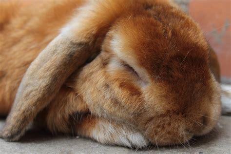 sleepy bunny the bunny who loved lavender books musa s box euforilla
