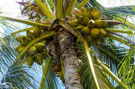 Harga Nature Republic Kelapa Gading all fresh