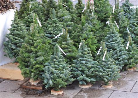 Garten Modern 5168 もみの木の育て方 剪定や鉢植えなどの手入れ 花言葉や種類は horti ホルティ