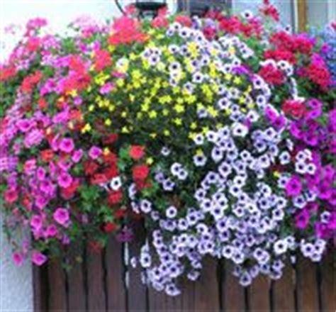 fiori per terrazzi al sole le 25 migliori idee su piante da ombra su