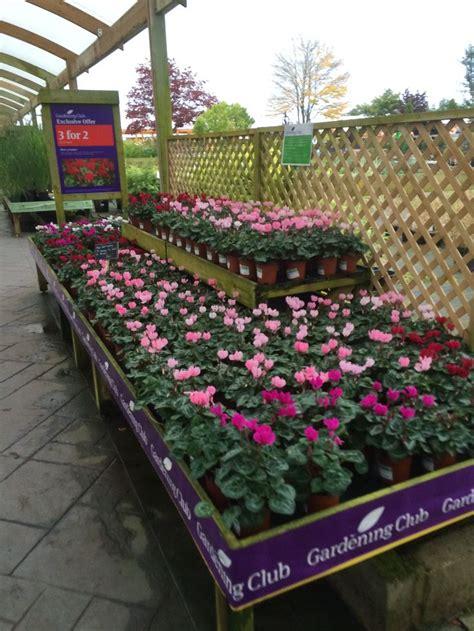 Wyevale Bridgemere Garden Centre Garden Retail Garden Flower Shop San Antonio