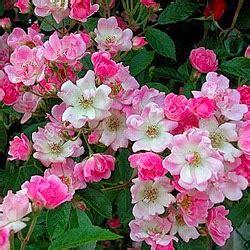 Vivaces Fleuries Tout L été by Jardin Alsace Vignoble