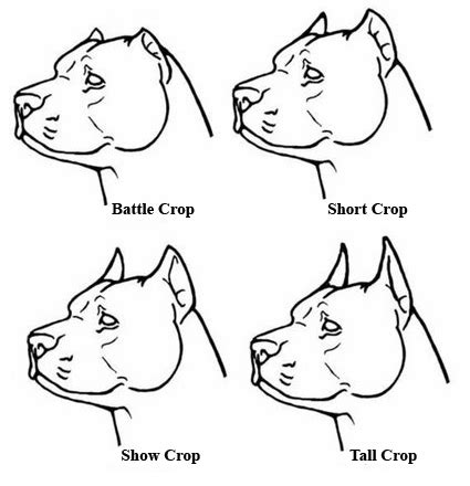 cropping dogs ears ear crop styles breeds picture