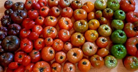 garden variety the american tomato from corporate to heirloom arts and traditions of the table perspectives on culinary history books a guide to the tomato variety