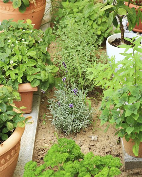 types of garden herbs herb garden design different types of herb gardens