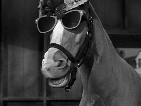 Mr Ed Meme - mister ed ed the beachcomber mr ed mister ed the
