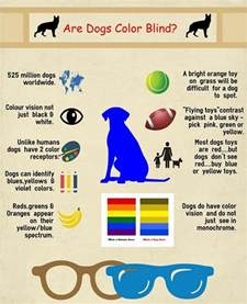 how dogs see color are dogs color blind the question only a could answer