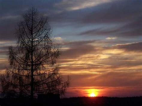 Baum Des Jahres 2012 5368 by Baum Des Jahres 2012 Die Europ 228 Ische L 228 Rche Mein