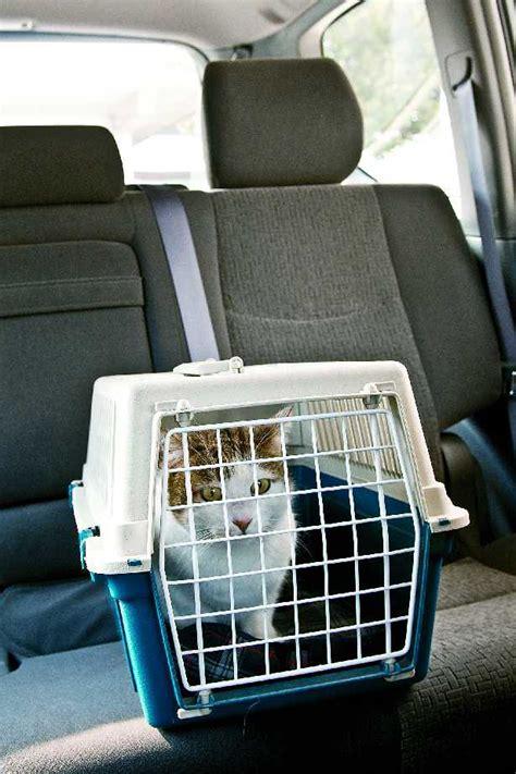 pericoli in casa il gatto e i pericoli in casa cure quotidiane gatto