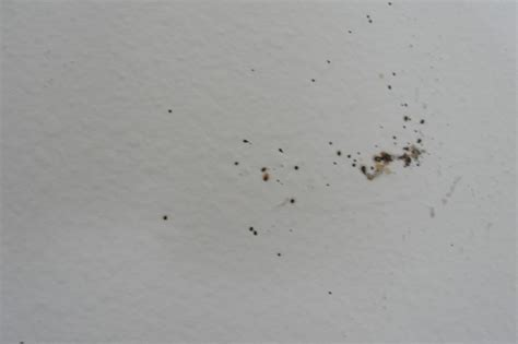 bed bugs on walls bed bug prevention pest control blog orange county