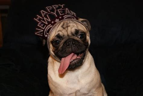 new year pug happy new year pug pug mugs