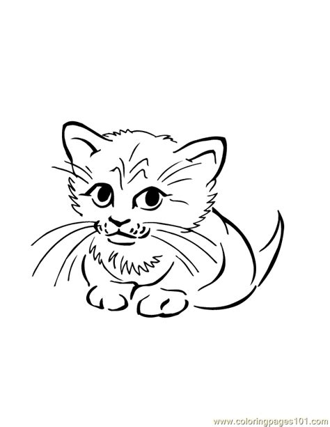 coloring pages baby cats baby cat coloring page free cat coloring pages