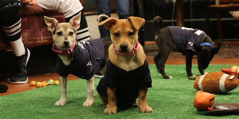 puppy bowl 2015 meet the pooches of puppy bowl 2015 huffpost