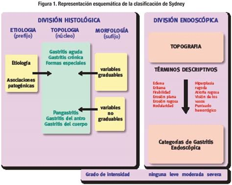 imagenes histologicas pdf gastritis and gastropathies