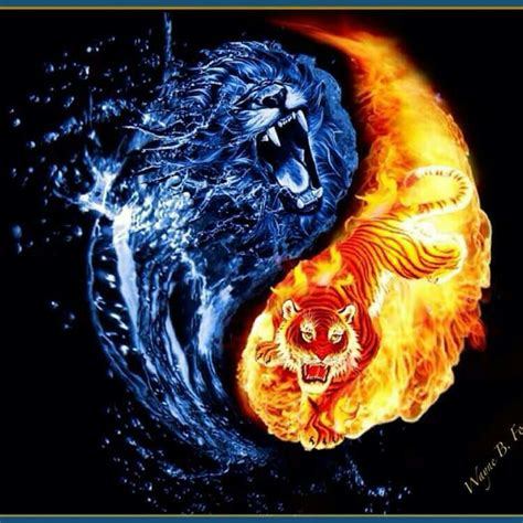 lion amp tiger yin yang flaming pictures pinterest yin