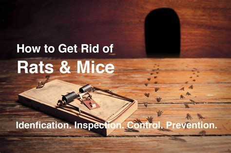 11 tips to keep mice away from your home 18 bathroom clean