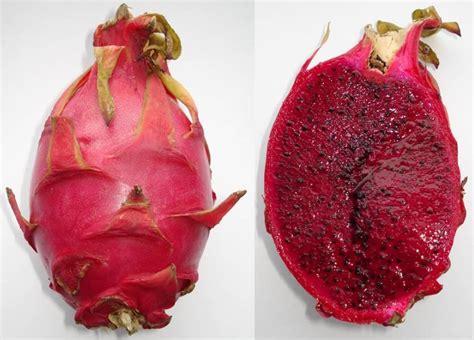 Sale Buah Naga Merah manfaat buah naga merah yang terbukti ilmiah mediskus