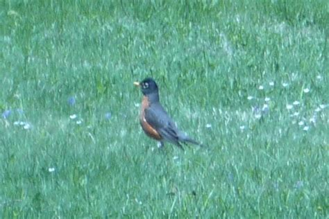 fat robin for all your birding needs in the hamden and