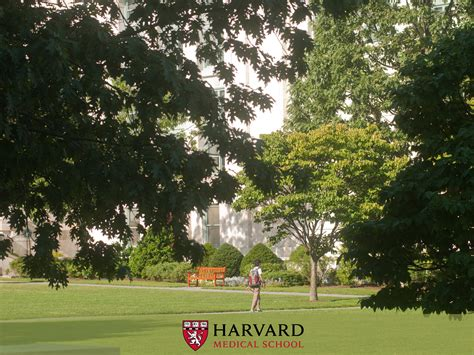 Harvard Mba To Wall by Hd Harvard Wallpapers Free 402968156 Reuun